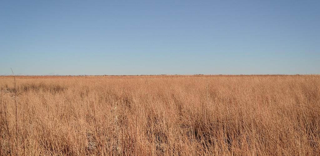 horizon over a field